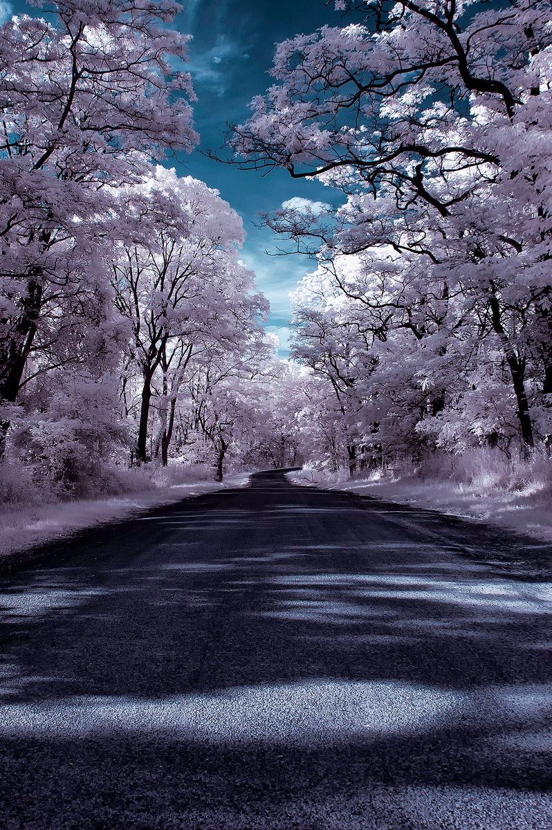 Infrared-0380- website